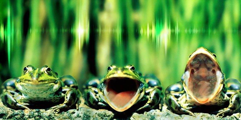 Canto polifónico armónico